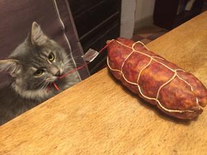 Notre chat Malo n'est pas un Saint...